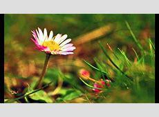 Bearbeitete Frühlingsbilder YouTube