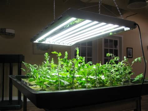 Grow Lights For Indoor Plants Canada by Light Homegrown Hydroponics