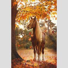 Mehr Als 70 Super Schöne Pferde Bilder! Archzinenet