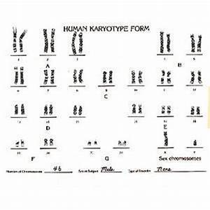 Types Of Human Chromosome Abnormalities Biokit U00ae