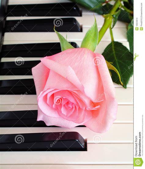 rose  piano keys stock images image