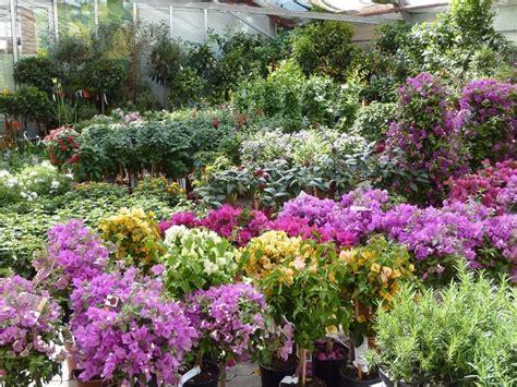 mediterrane pflanzen für den garten mediterrane pflanzen f 252 r den garten garten haus garten zenideen