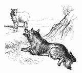 Sheep Wolf Wolves Coloring Pages Sheepdog Lewis Watching Artofmanliness Culture Animals Illustration Lying Ground sketch template