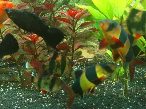 fische archive seite 4 5 aquarium perfekt