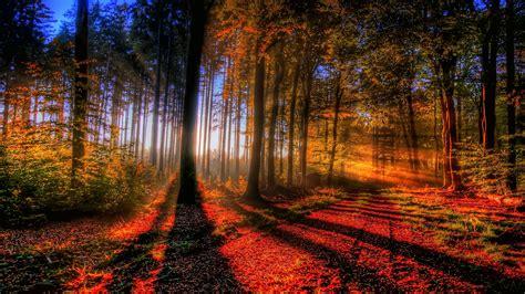 Nature, Landscape, Forest, Trees Wallpapers Hd / Desktop