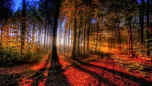 Nature, Landscape, Forest, Trees, Wallpapers, Hd, Desktop