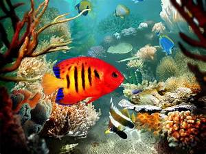 coral reef fish pictures