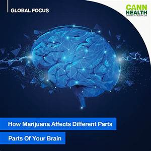 How Marijuana Affects Different Parts Of Your Brain
