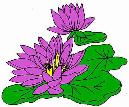 Water Lily Clipart Clip Flower Lilly Pad