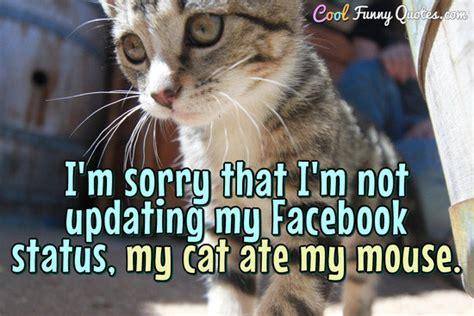 im   im  updating  facebook status  cat