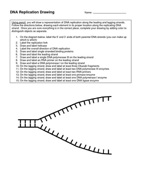 dna replication coloring worksheet 16 best images of dna replication worksheet dna