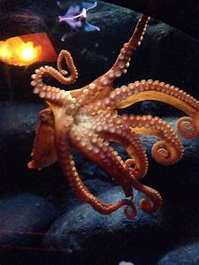 The gallery for --> Octopus Attack Diver
