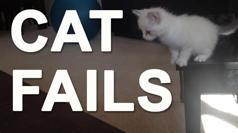 cat fails  sound effects compilation  funny cats