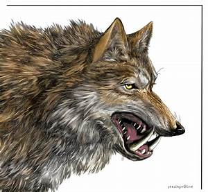 Image Gallery prehistoric wolf