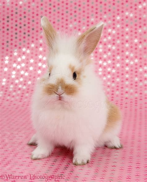 cute baby bunny sitting  pink starry background photo