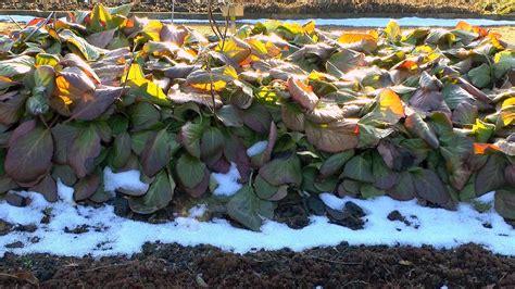 Gräser Immergrün Winterhart by Stauden Und Mehrj 228 Hrige 252 Berwintern Gartennatur