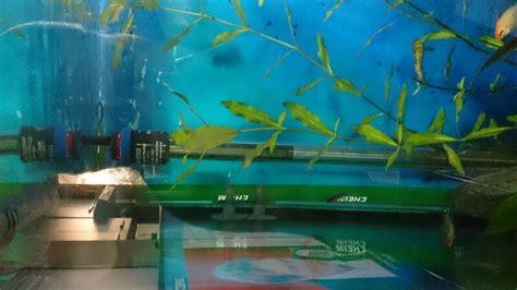 comment choisir le meilleur chauffage aquarium tests avis et comparatif