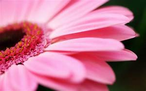 Black and White Wallpapers: Pink Flower Wallpaper
