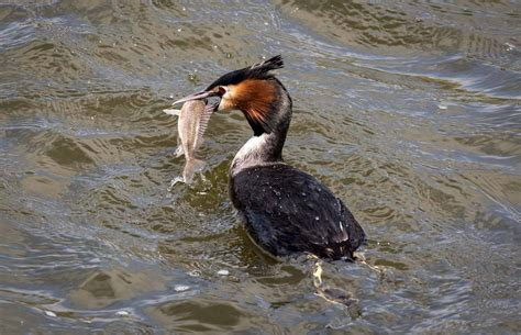 do we need to do more about fish eating birds