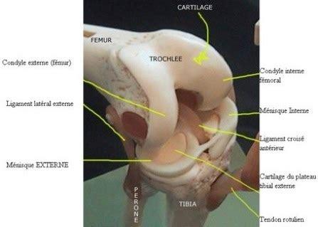 douleur au genou gauche interieur m 233 nisque