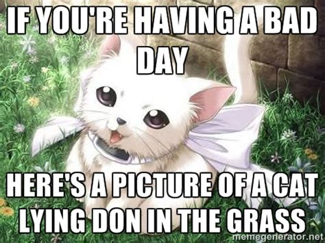 Bad Day Meme - cat meme bad day image memes at relatably com