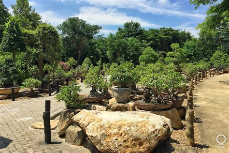 ลานบอนไซ | ณ สัทธา อุทยานไทย