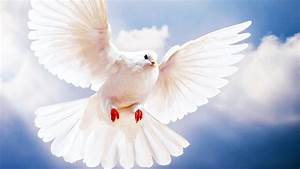 White Pigeon Flying Wallpapers HD Pictures – HD Wallpapers ...