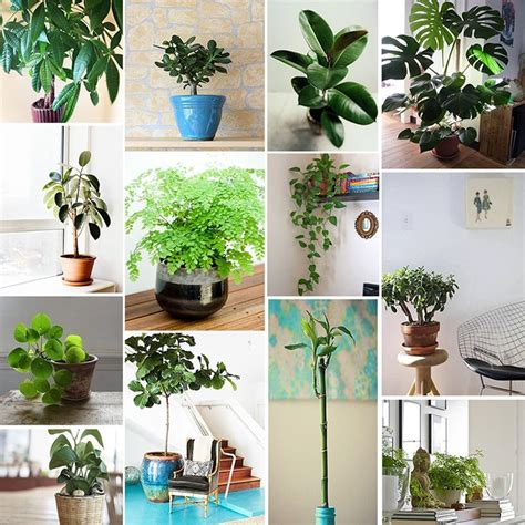 best plant for bathroom feng shui 17 best ideas about feng shui on apartment