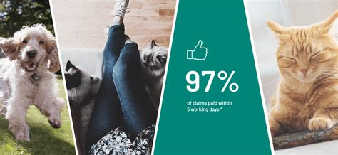 Honestly, healthy paws wins again because while they don't give multiple pet discounts, their overall prices are still lower than those that do. Pet Insurance | Pet Insurance Quotes | Argos Pet Insurance