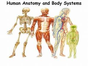 Organ Systems of the Human Body | Fosfe.com