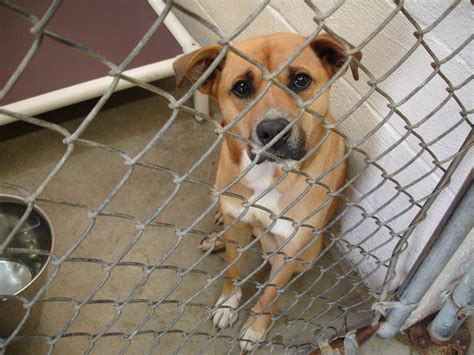 helps ways  volunteer   local dog rescue