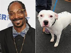 Snoop Dogg Wants to Adopt Abandoned Dog Named Snoop ...
