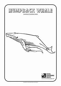 Cool Coloring Pages Humpback Whale Coloring Page Cool