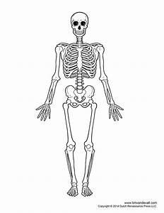 Human Skeleton Diagram - Blank
