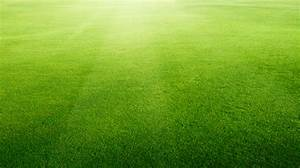 Free photo: Artificial grass background - Lawn, Indoor ...