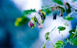 Pflanze Lila Blätter : pflanze close up gr nen bl ttern mit lila bl tter fuzzy hintergrund hintergrundbilder hd bild ~ Eleganceandgraceweddings.com Haus und Dekorationen