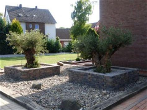 Garten Kaufen Deutschland by Olivenbaum Pflanzen Der Olivenbaum In Deutschland