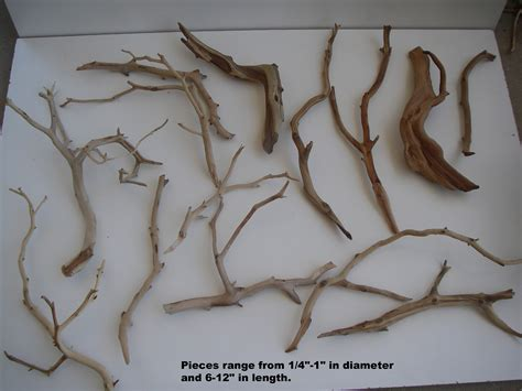 inspirations manzanita driftwood  inspiring futuristic