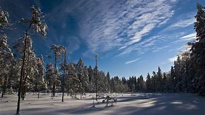Sunny Forest Winter Sky Trees Background Tree