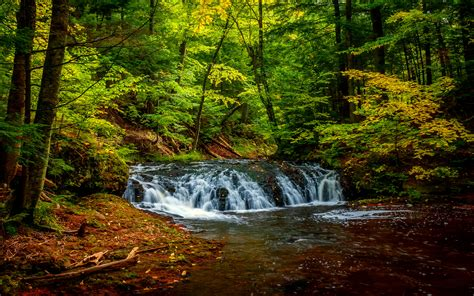 Forest Landscape River Forest Green Hd Wallpaper 34809