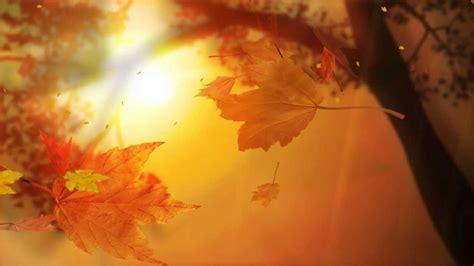 leaf fall animated wallpaper httpwwwdesktopanimated