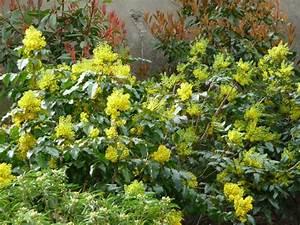 Arbuste À Feuillage Persistant : arbuste feuillage persistant fleuris my preziosa ~ Melissatoandfro.com Idées de Décoration