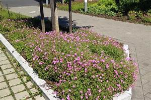 Pflanzen Für Schattengarten : robuste pflanzen f r eine unterbepflanzung von b umen und str uchern native plants ~ Sanjose-hotels-ca.com Haus und Dekorationen