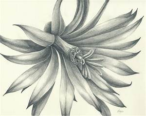 Pencil Artistic Flowers Artistic Flower Pencil Sketch ...