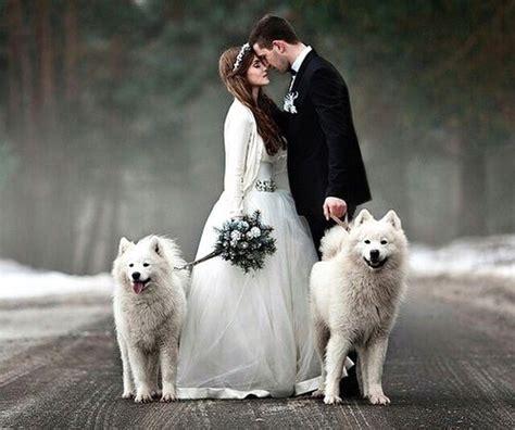 16 Super Cute Dog Wedding Photos That Will Make You Invite