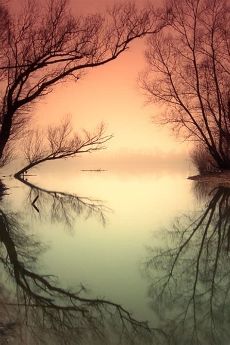 Bare Branches Photography Reflection Trees Image