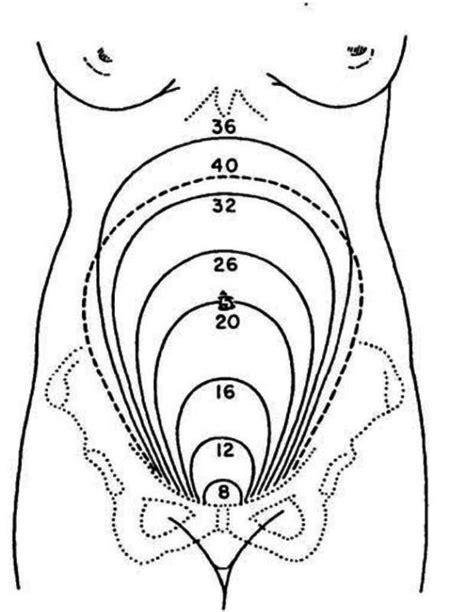 Rahim Wanita Diangkat Perut Bagian Bawah Keras Tanda Hamil Kah Tanya Alodokter