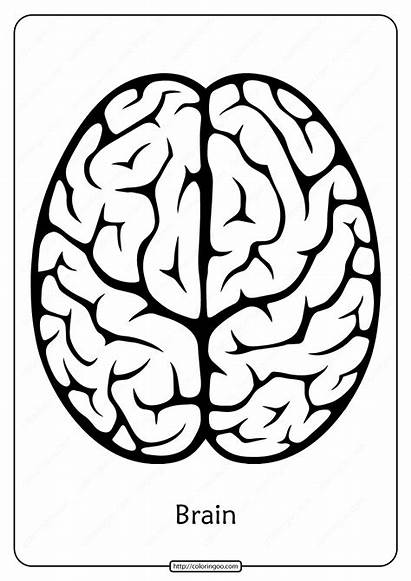 Brain Coloring Pages Outline Printable Pdf Email
