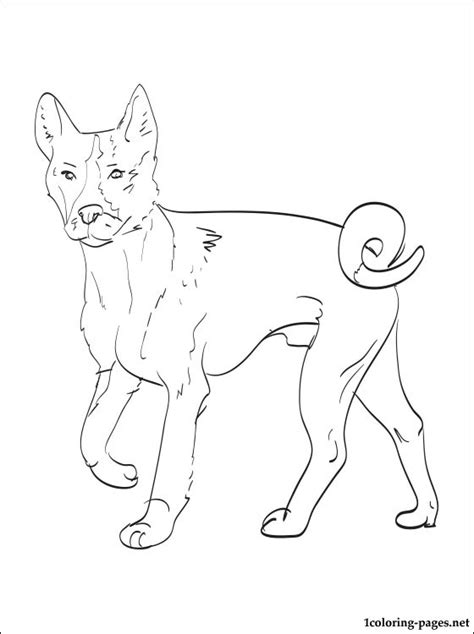 basenji coloring page coloring pages