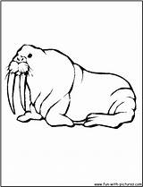 Walrus Coloring Fun Pages sketch template